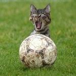 Futbol_full